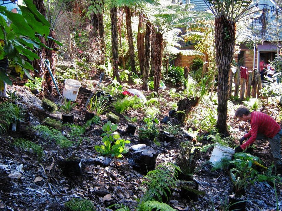 A bush garden in Waitakere foothills