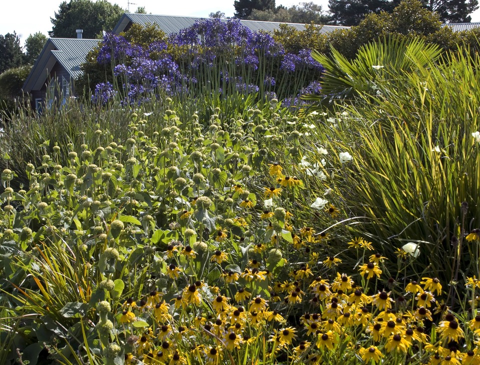 Auckland public gardens